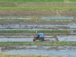 Chollima tractor, Tumengang, DPRK (June 2013)