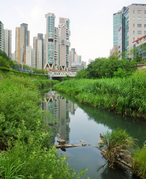 Cheonggyecheon16
