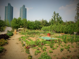 Community garden at Seoul Forest.