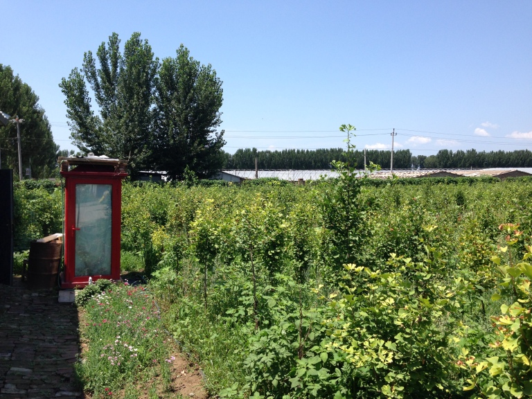 One for my fellow sci-fi nerds: Tardis in the orchard at the Herb Whisperer farm.