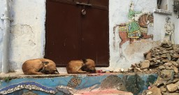 Friendly street dogs.