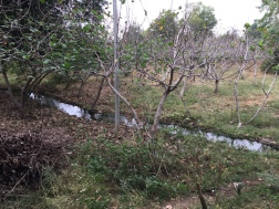 The main irrigation ditch from the well to the field.