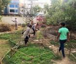 Adding mulch to garden beds.