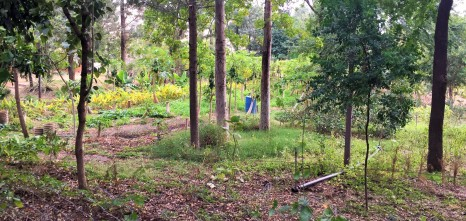 The permaculture garden on site.
