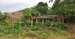 Trellacing in a mandala-shaped garden.